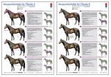 Akupunkturtafel für Pferde 5 und 6