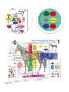 Akupunkturtafel für Pferde 7