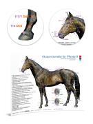 Akupunkturtafel für Pferde 8