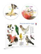 Akupunkturtafel für Vögel